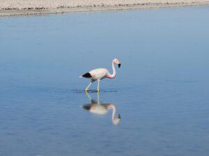 DSC_0982_flamingo.jpg